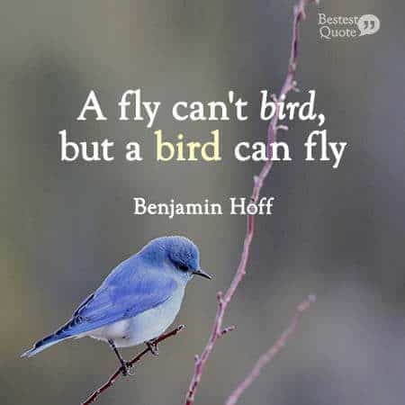 A fly can´t bird, but a bird can fly. Benjamin Hoff, the Tao of Pooh