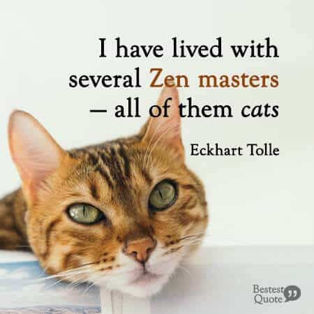 I have lived with several Zen masters - all of them cats. Eckhart Tolle