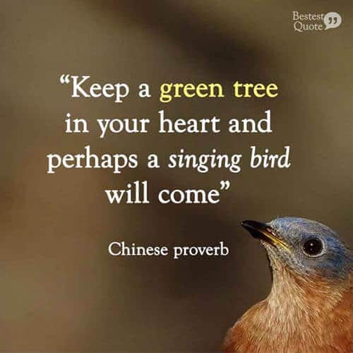 """Keep a green tree in your heart and perhaps a singing bird will come."" Chinese proverb"